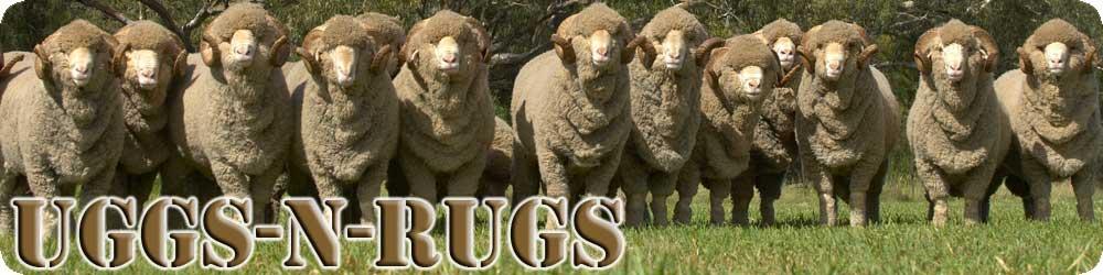 Australian Merino Rams - Uggs-N-Rugs